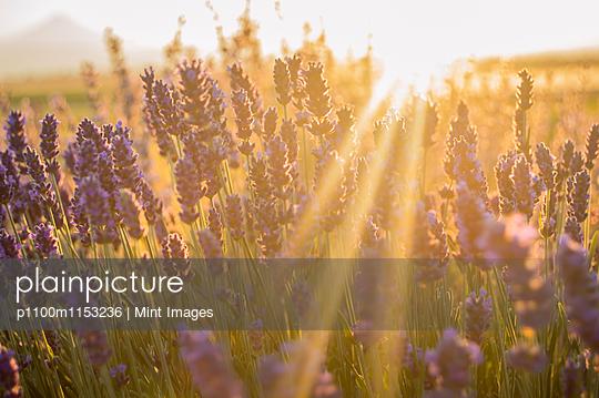 p1100m1153236 von Mint Images