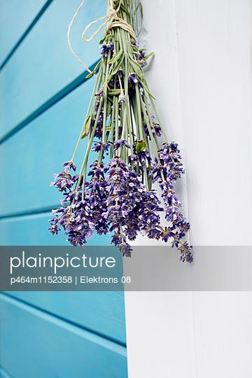 Lavendel - p464m1152358 von Elektrons 08