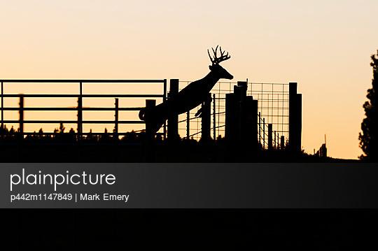 p442m1147849 von Mark Emery