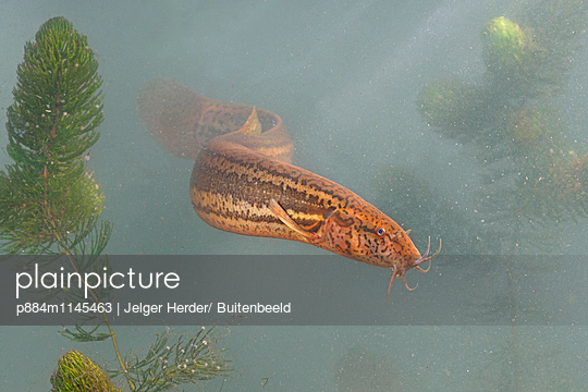 p884m1145463 von Jelger Herder/ Buitenbeeld