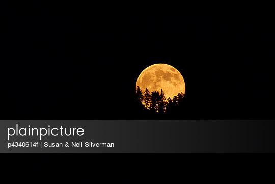Full Moon Treeline