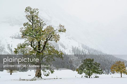 Verschneite Ahornbäume, Großer Ahornboden, Eng, Naturpark Karwendel, Karwendel, Tirol, Österreich - p1316m1160768 von Andreas Strauß