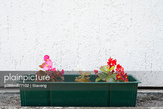 Red and pink flowers in window box