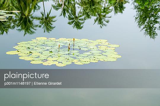 p301m1148197 von Etienne Girardet