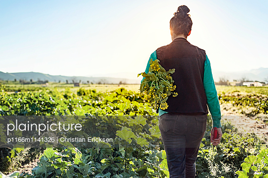 Rear view of woman holding plants while walking on farm against clear sky