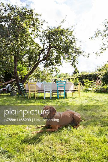 Hund ruht sich auf dem Rasen aus  - p788m1165299 von Lisa Krechting