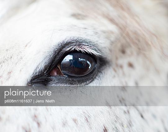 Pferdeauge - p608m1161637 von Jens Nieth