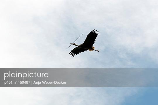 Fliegender Storch mit Nistmaterial - p451m1159487 von Anja Weber-Decker