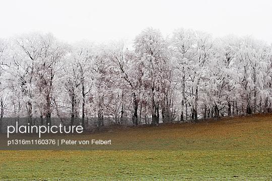 Wiese und verschneite Bäume, Leoni, Starnberger See, Bayern, Deutschland - p1316m1160376 von Peter von Felbert