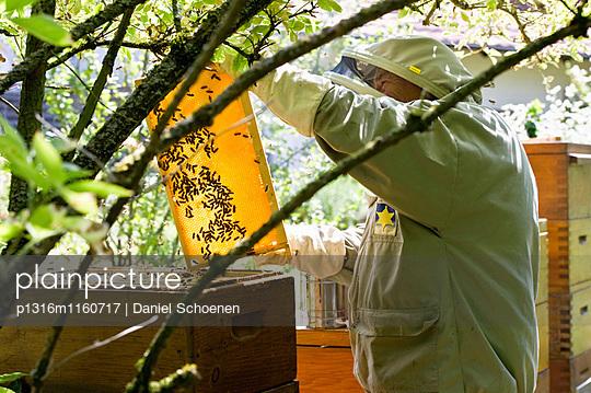 Imker mit Honigwaben, Freiburg im Breisgau, Schwarzwald, Baden-Württemberg, Deutschland - p1316m1160717 von Daniel Schoenen