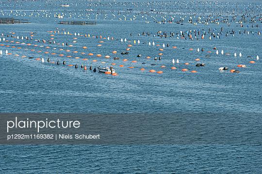 Muschelzuchtanlagen - p1292m1169382 von Niels Schubert