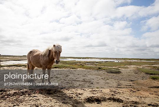 Nordseeinsel - p1257m1154584 von Jozef Kubica