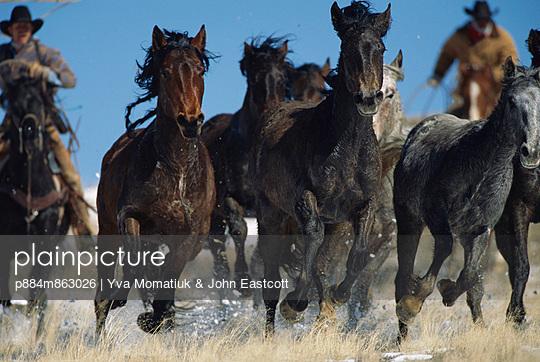 Mustang group running