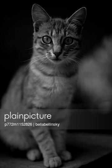 Katzenportrait - p772m1152826 von Jonny Elektra