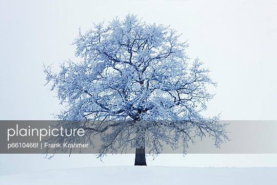 Winter landscape with snow covered oak