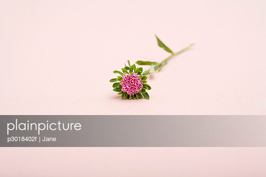 A exotic flower with pink petals