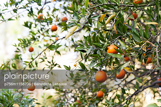 Palm Springs - p756m1158706 von Bénédicte Lassalle