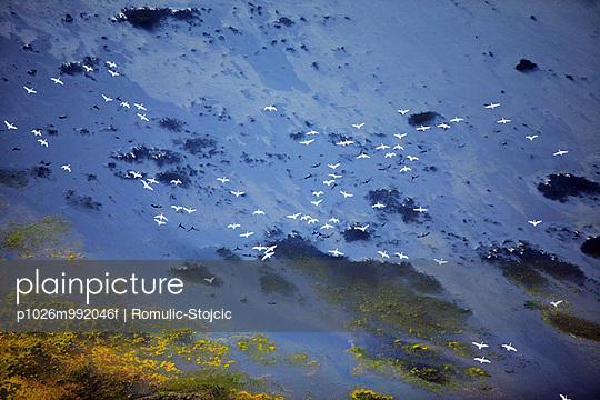 Flock of birds over lake scenery, Landmannalaugar, Iceland