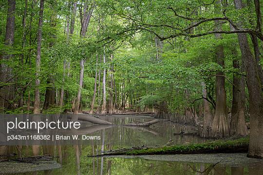 p343m1168382 von Brian W. Downs