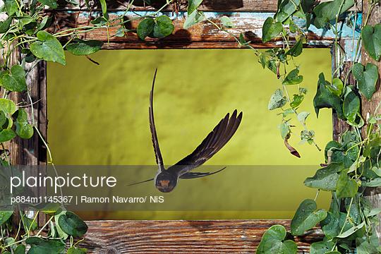 p884m1145367 von Ramon Navarro/ NiS