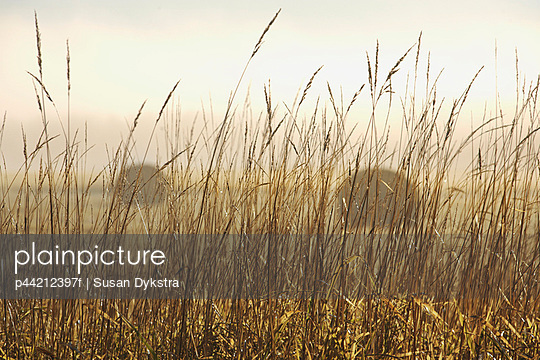 thunder bay, ontario, canada; bales of hay in a field in the fog