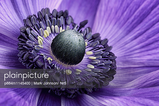 p884m1145400 von Mark Johnson/ NIS
