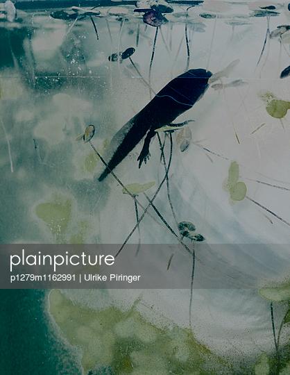 Kaulquappe - p1279m1162991 von Ulrike Piringer