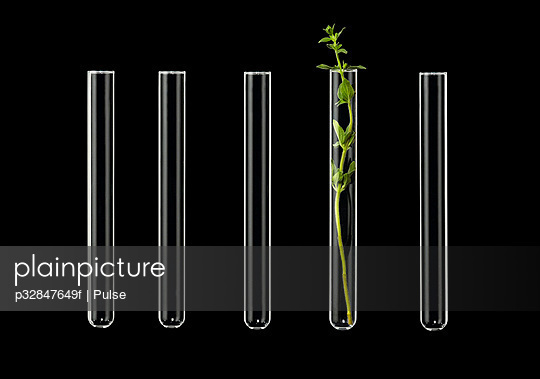 Test tubes on black background, one with seedling