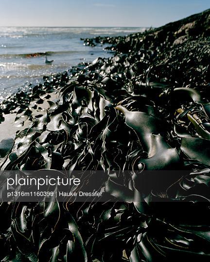 Seetang am Wharariki Beach bei Ebbe, Nordwestküste, Südinsel, Neuseeland - p1316m1160399 von Hauke Dressler