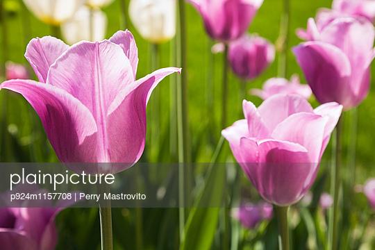 p924m1157708 von Perry Mastrovito