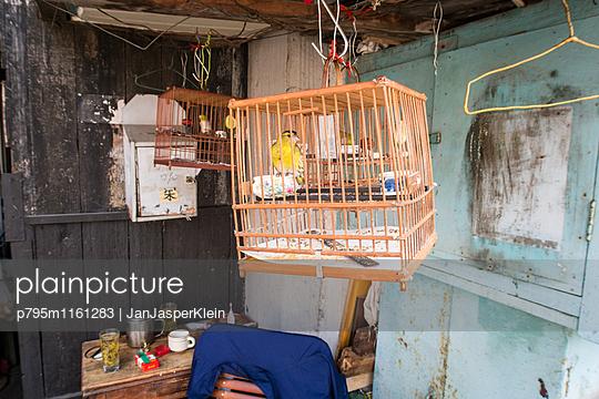 Vogelkäfig - p795m1161283 von Janklein