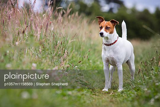 Freundlicher Hund - p1057m1158569 von Stephen Shepherd