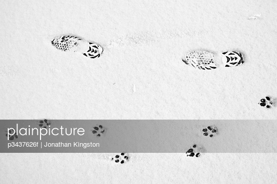 Dog and human footprints on a road in the snow
