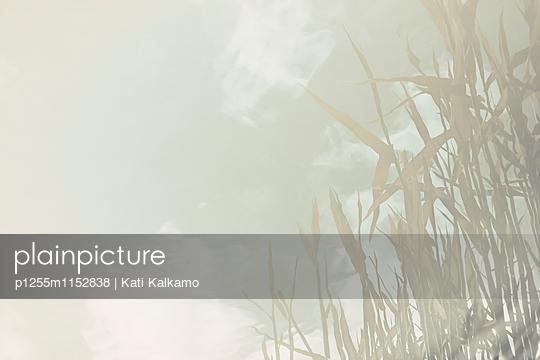 Schilf im Sonnenschein - p1255m1152838 von Kati Kalkamo