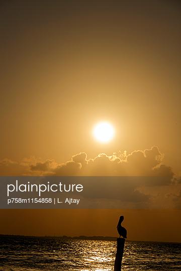 Sonnenuntergang am Meer nahe Isla Mujueres - p758m1154858 von L. Ajtay