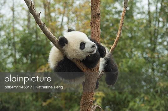 p884m1145317 von Katherine Feng
