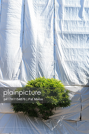 Stadtbaum - p417m1154876 von Pat Meise
