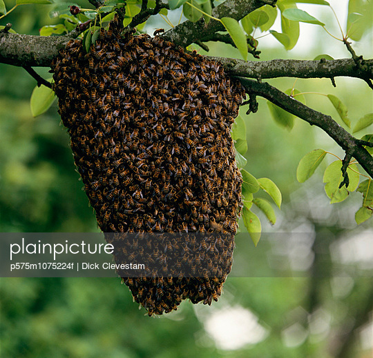 Beehive on tree branch close-up