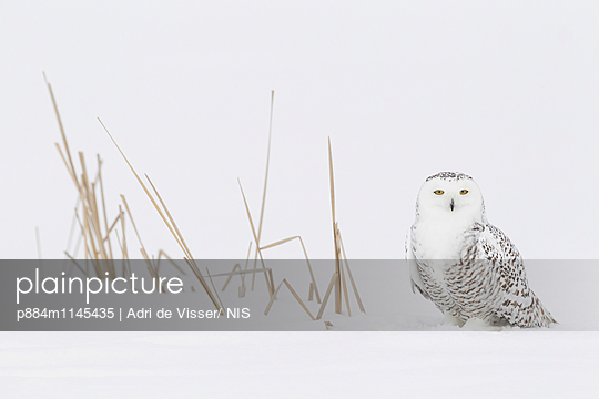 p884m1145435 von Adri de Visser/ NIS