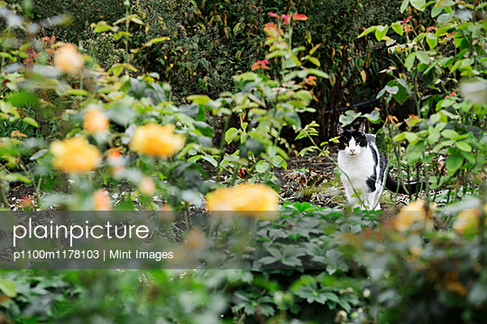 A cat among the flowers in a flowerbed.