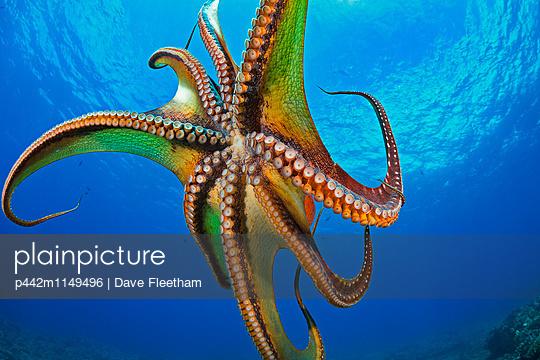 p442m1149496 von Dave Fleetham