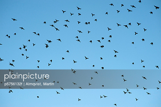 Silhouettes of birds against blue sky