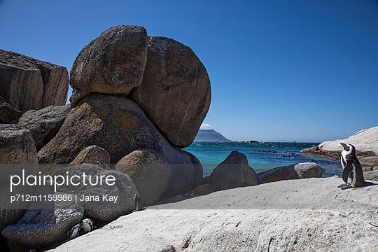Pinguine an der Felsküste - p712m1159986 von Jana Kay