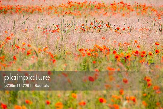 Wilde Blumenwiese - p739m1147291 von Baertels