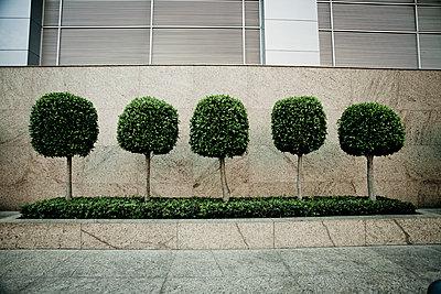 Group of trees - p1296m1467361 by Jean-François Brière