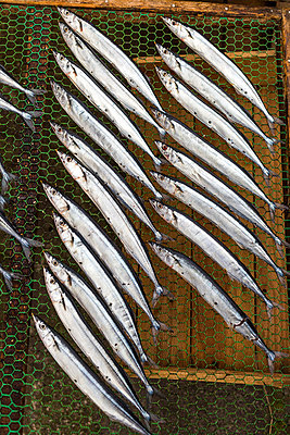 Fishes - p1271m1553225 by Maurice Kohl
