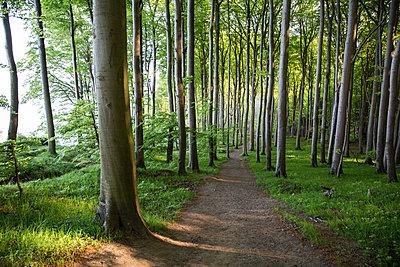 Germany, Mecklenburg-Western Pomerania, Ruegen, Jasmund National Park, Beech forest - p300m2059274 von Maria Maar
