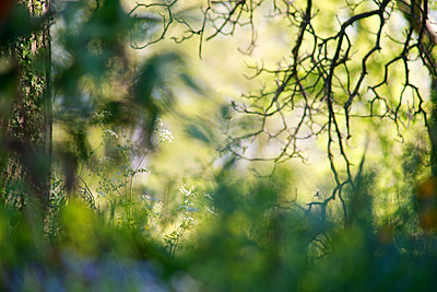 Blurred natural background - p624m1101465f by Odilon Dimier