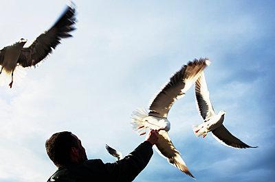 Person Feeding Flying Birds   - p847m889093 by Bildhuset