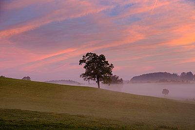 Germany, Pfaffenwinkel, view of landscape at morning mist - p300m2059185 by Lisa und Wilfried Bahnmüller
